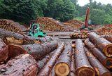 世界的な木材不足「ウッドショック」 価格高騰で業者悲鳴 全商連 関係省庁に対策要請